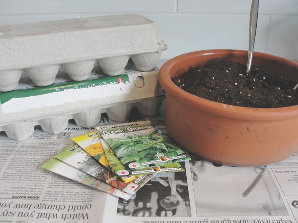 egg carton with dirt and seed packets