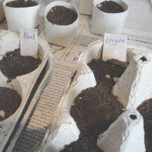 egg cartons with seeds inside