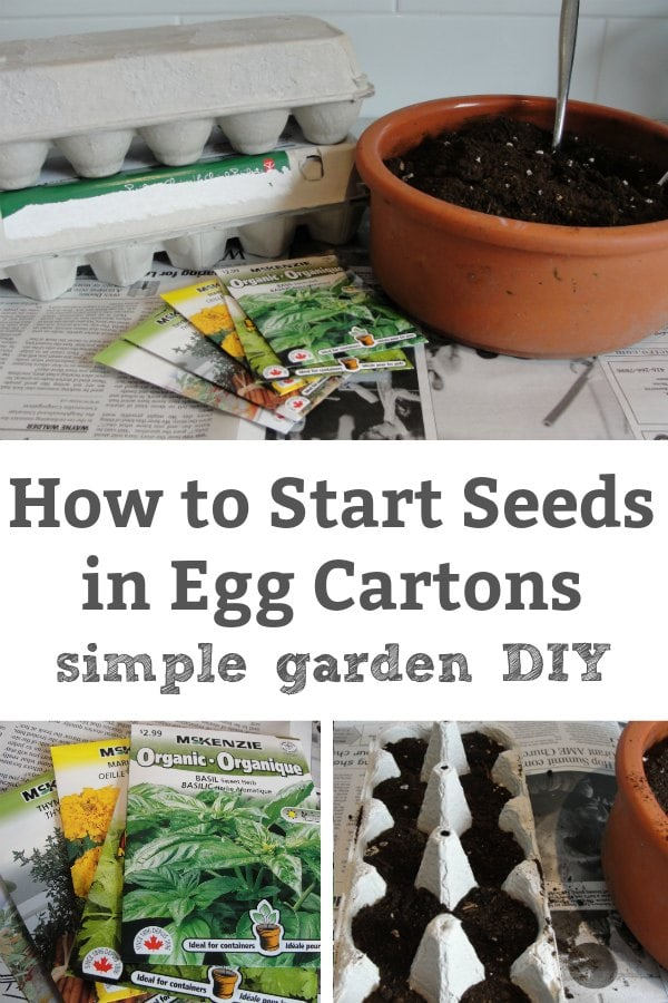 how to start seeds in egg cartons