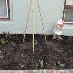 Green Life = veggie garden