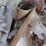 Green Life – Birch Bark Part 2