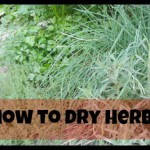 Green Life – how to dry herbs
