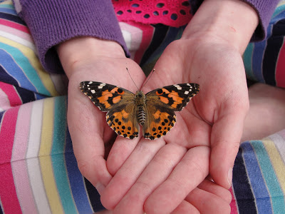 Green Life – our butterfly experience