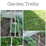 Green Life – DIY garden trellis and pinching tomato suckers
