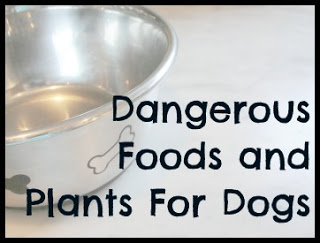 dangerous foods and plants for dogs