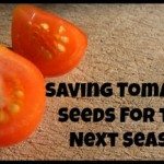 Saving Tomato Seeds for Next Season
