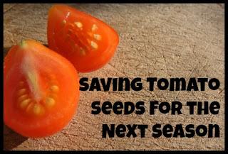 Saving Tomato Seeds for Next Season