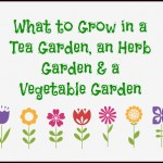 Green Life ~ What to Grow in a Home Garden