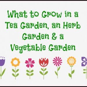 What to Grow in a tea garden, herb garden and vegetable garden