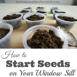 How to Start Seeds on Your Window Sill