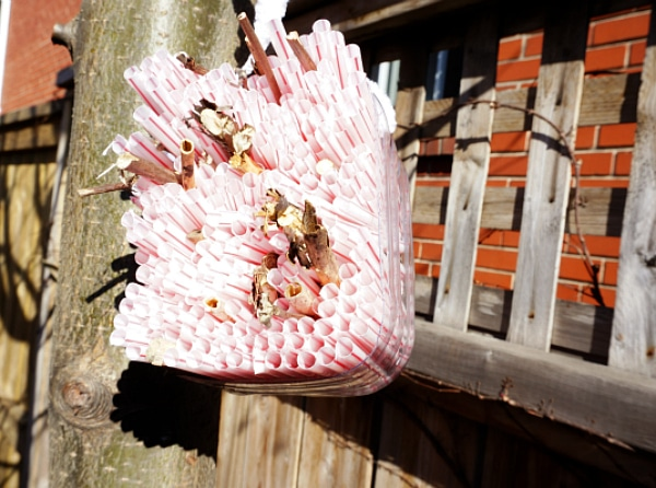 hanging bug house