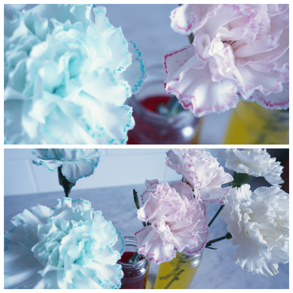 coloured carnation collage