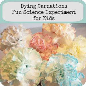 dye carnations button