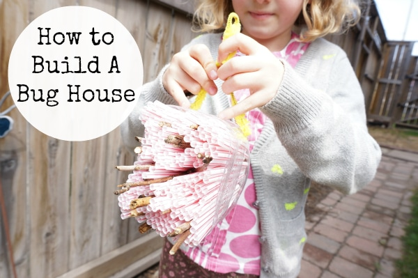 how to build a bug house