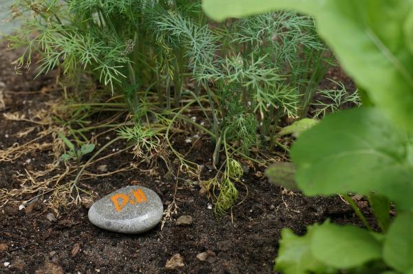 garden marker dill