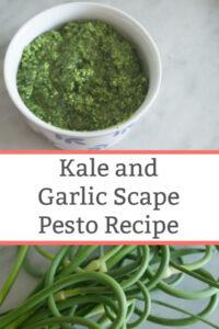 kale and garlic scape pesto recipe