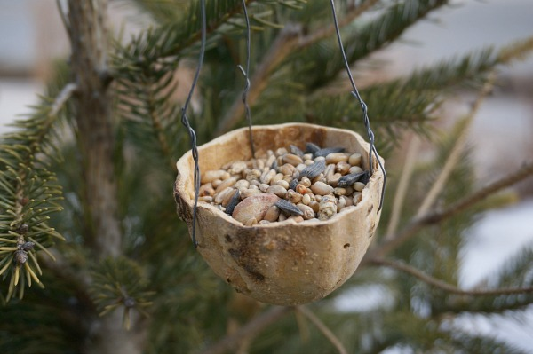 how-to-make-gourd-bird-feeder