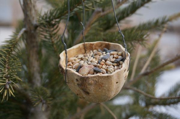 gourd bird feeder 3