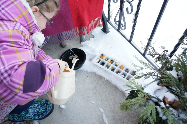 ice ornaments freezing