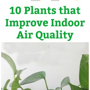 10 plants that improve indoor air quality pin