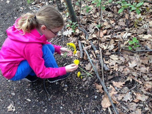 placing dandelions
