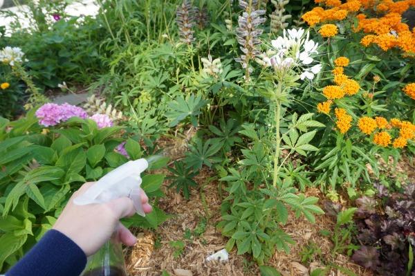 coffee grounds liquid fertilizer