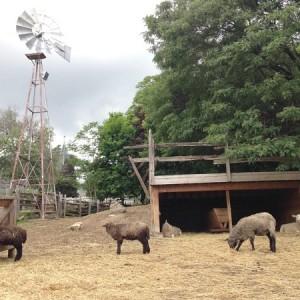 farm camp gallery