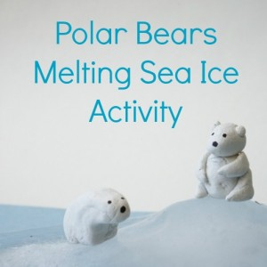 polar bear activity sea ice melting