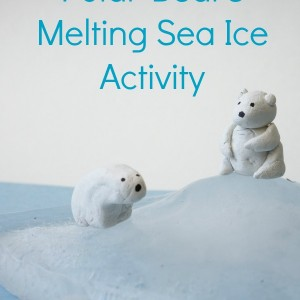 polar bear activity melting sea ice