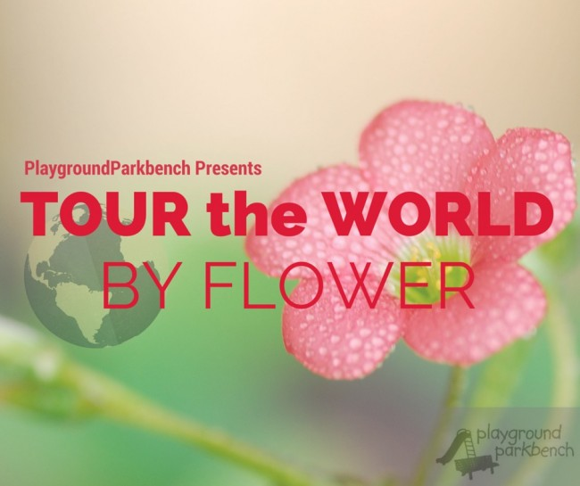 tour the world by flower