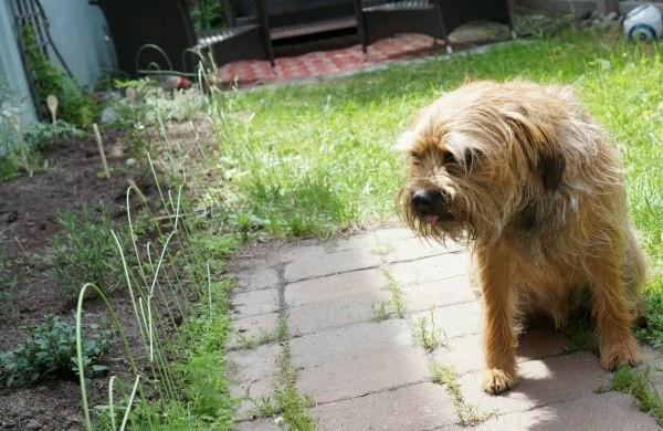 arthur in the garden