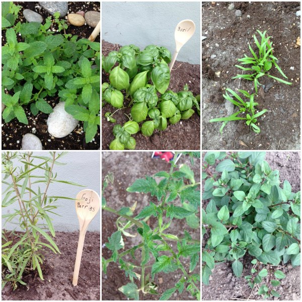 may garden collage