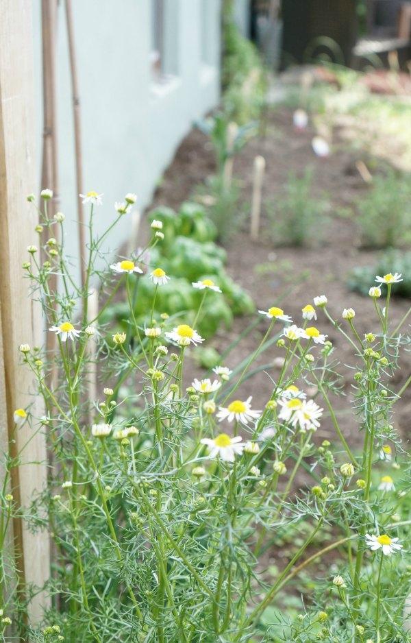 a peek in the garden