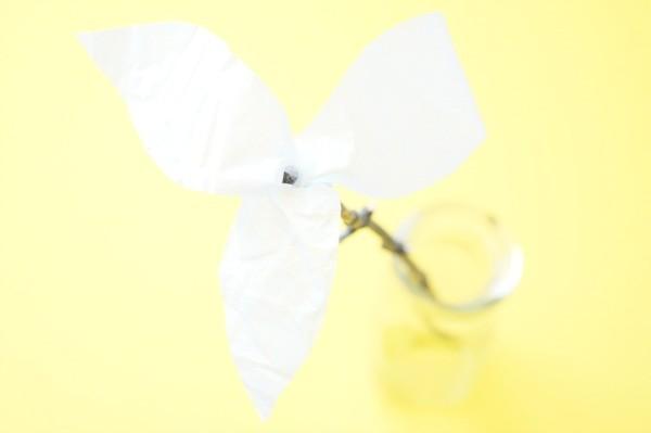 trillium flower petals
