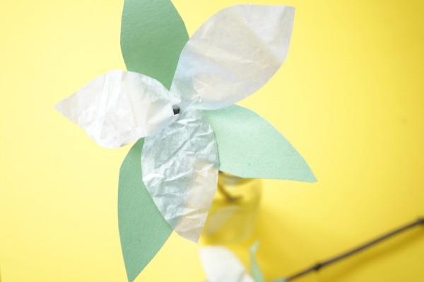 trillium leaves bracts