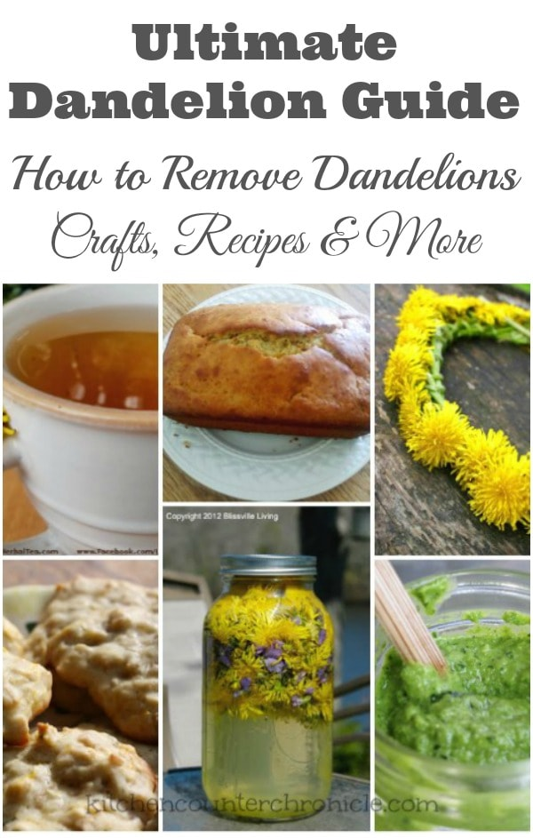 Ultimate Dandelion Guide How to Remove Dandelions, Crafts, Recipes and More