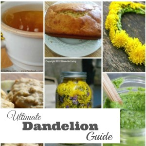 Ultimate Dandelion Guide