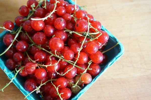 basket of red currants