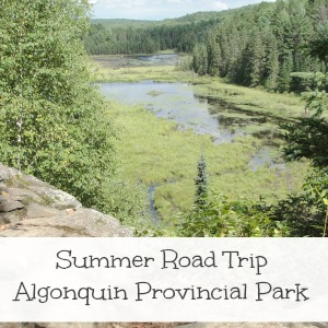 summer road trip algonquin provincial park
