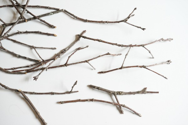 twig spider branches