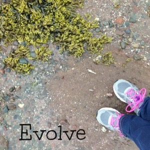 evolve water