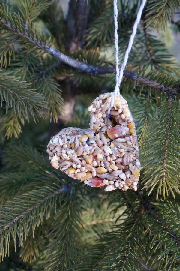 cookie cutter bird feeder in tree
