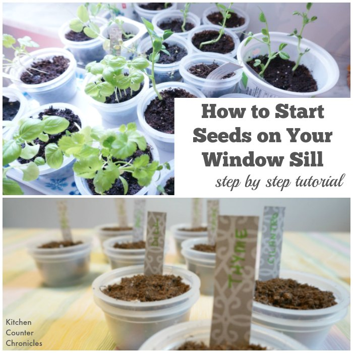 How to Start Seed on your window sill