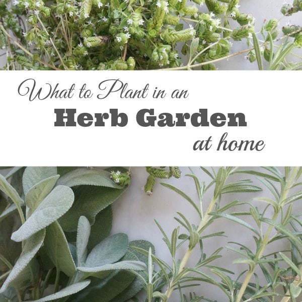 What to plant in an herb garden