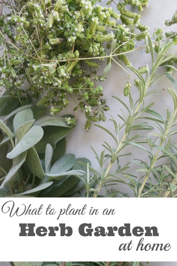 What to Plant in an Herb Garden at Home