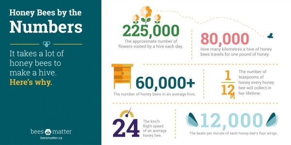 Honey Bee Populations By the Numbers