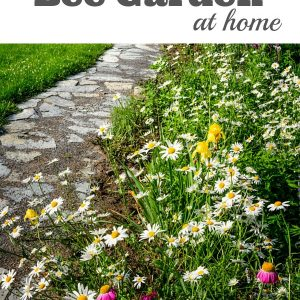 How to Build a Bee Garden at Home