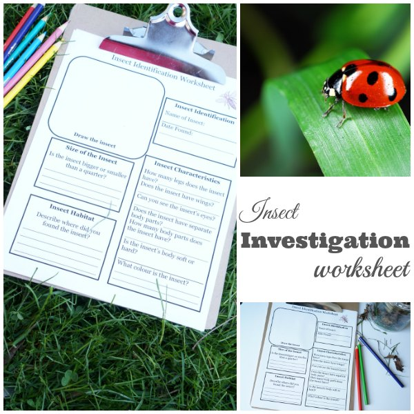 Insect Investigation Worksheet