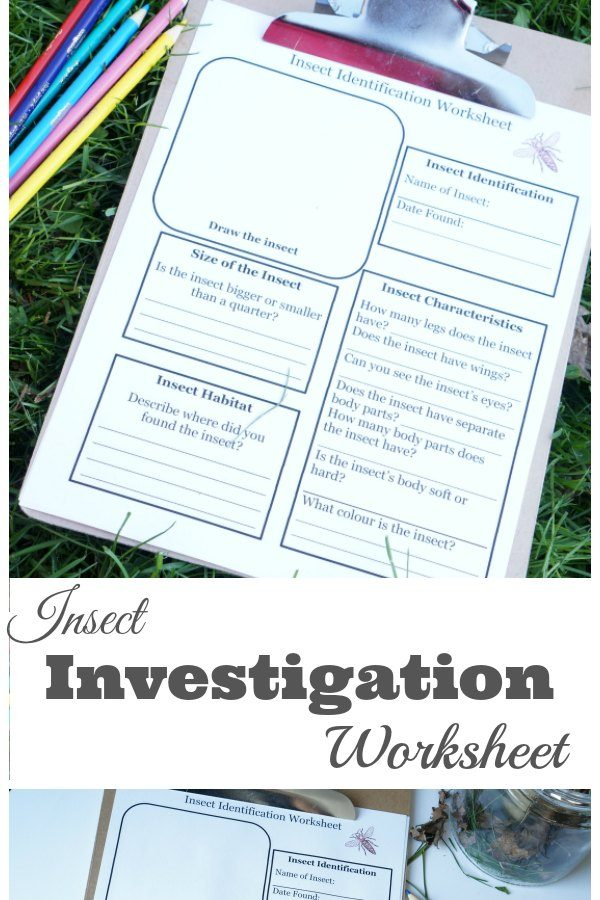 Insect Investigation Worksheet