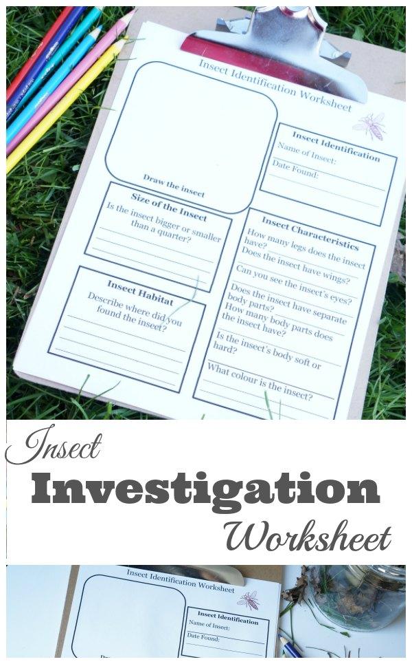 insect investigation worksheet for kids-min